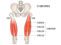 大腿直筋 エクササイズ