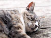 食べ過ぎてしまうのは 睡眠不足?