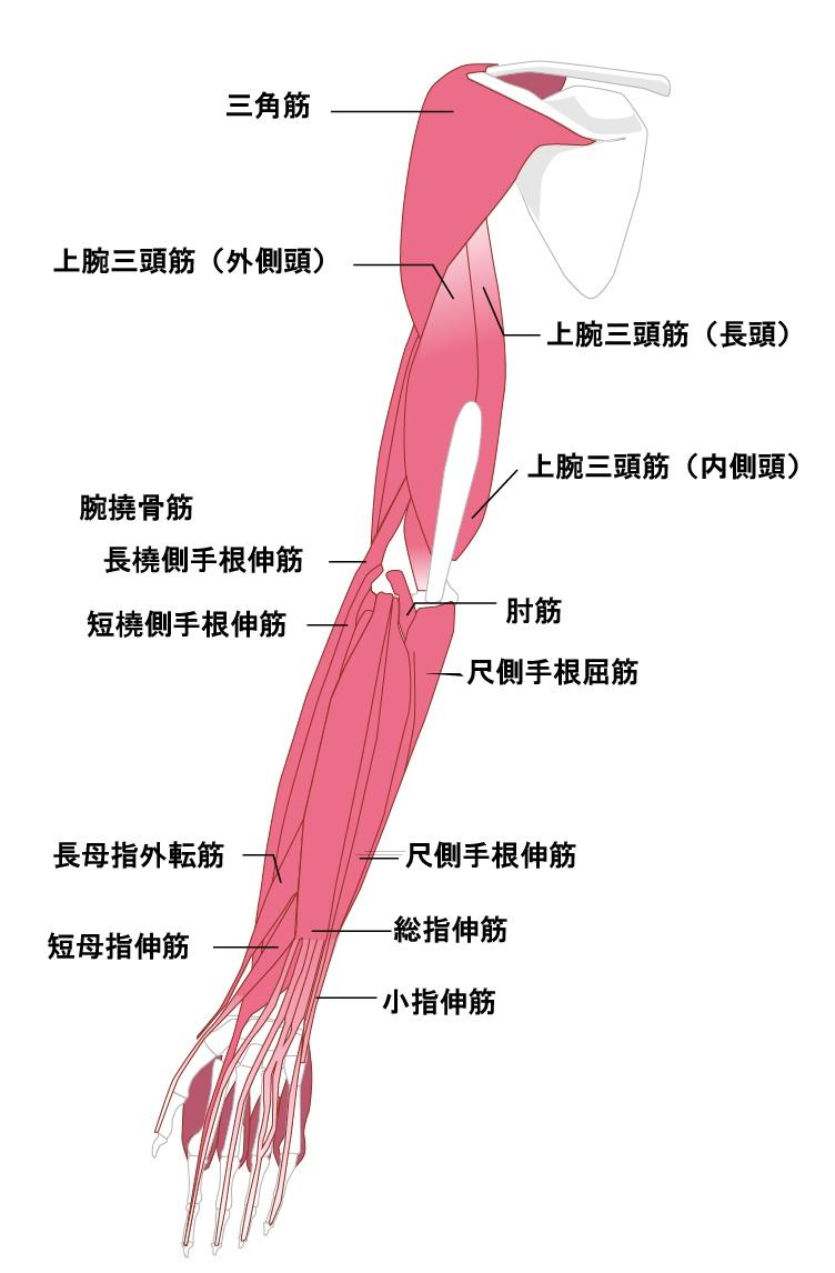 内側 痛い 二の腕